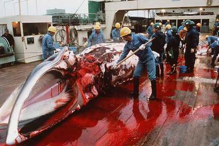 Whale blood